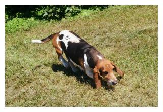 basset-hound-mom-cloey2