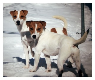 jack-russel-mothers2