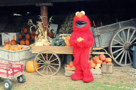 Elmo's here to bring pumpkins to everyone!